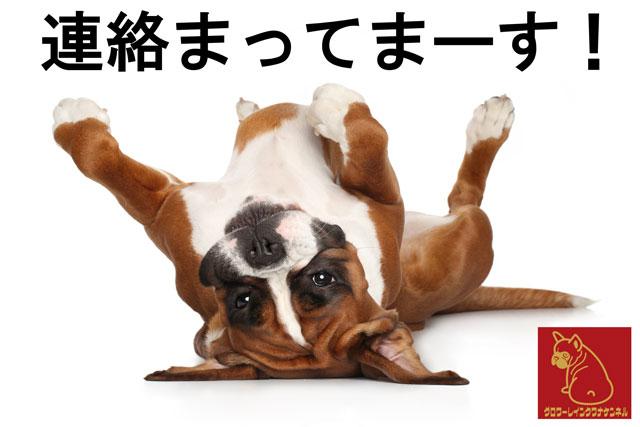 ボクサー犬の子犬