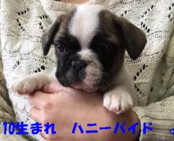 ハニーパイド&パイドの赤ちゃん | 2017年1月10日生まれ